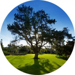 tree-sunrise-circle